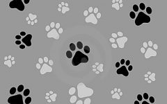 Pets of NAI: Hershey