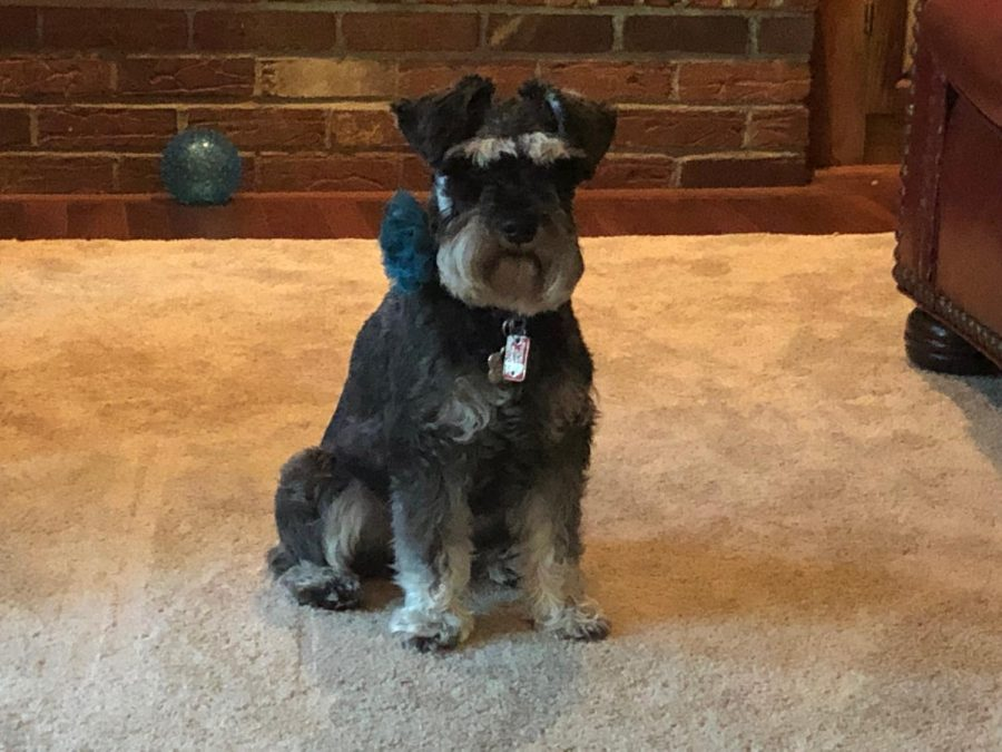Owner: Olivia Beining - Grade: 10th - Pet's name: Zoey