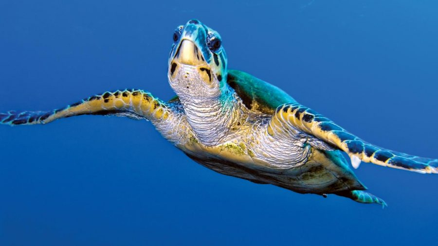 Save the Turtles?!?!