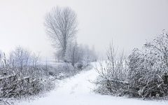 No More Snow Days?!