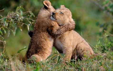 HUG (Human Generosity)