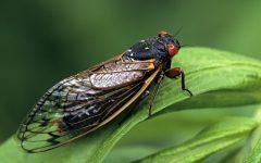 See Ya Soon, Cicadas!